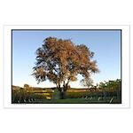 """Lone Oak Tree in Vineyard. """"The Tree"""""""