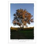 Napa Trees - Harvest large poster