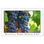 napa valley grapes, harvest large posters