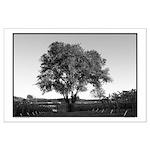 Lone Oak Vineyard Black + White LG Posters