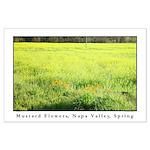 Mustard Flowers, Napa Valley, Spring LG Poster