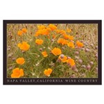 Calif. Poppies Napa Valley Large Poster