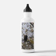 Bald Eagle #01 Water Bottle