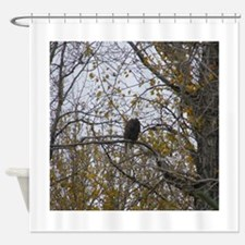 Bald Eagle #01 Shower Curtain