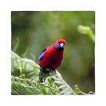 Tropical Parrot Queen Duvet