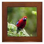 Tropical Parrot Framed Tile