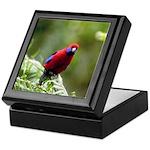 Tropical Parrot Keepsake Box