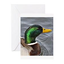 Male Mallard Greeting Cards (Pk of 20)