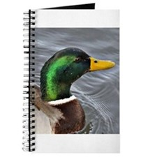 Male Mallard Journal