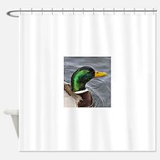 Male Mallard Shower Curtain