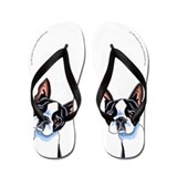 Boston terrier Accessories