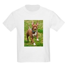 Pit Bull 11 T-Shirt