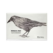 American Crow - Rectangle Magnet (10 pack)