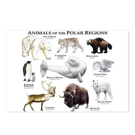 Animals of the Polar Regions Postcards (Package of