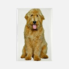 Goldendoodle Rectangle Magnet