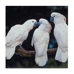 3 White Parrots Tile Coaster
