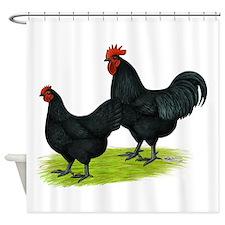 Australorp Chickens Shower Curtain