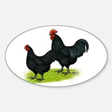 Australorp Chickens Decal