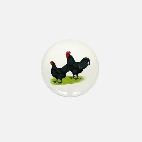 Australorp Chickens Mini Button