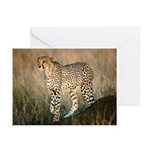 The Hunt Begins Greeting Cards (Pk of 20)