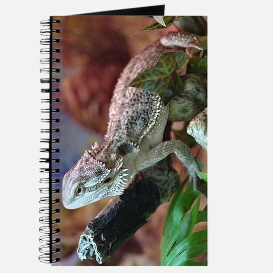 Bearded Dragon Journal