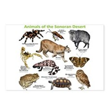 Animals of the Sonoran Desert Postcards (Package o