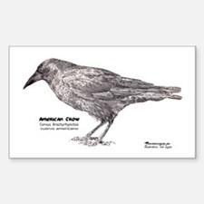 American Crow - Rectangle Decal