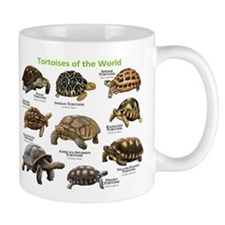 Tortoises of the World Small Mug