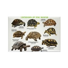 Tortoises of the World Rectangle Magnet