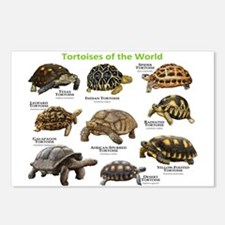 Tortoises of the World Postcards (Package of 8)