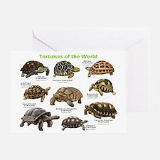 Tortoises of the World Greeting Card