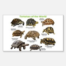 Tortoises of the World Decal