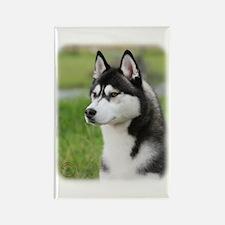Siberian Husky 9Y570D-006 Rectangle Magnet