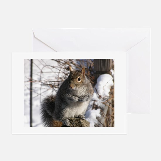 Gray squirrel Greeting Cards