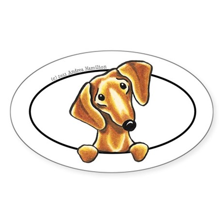 Smooth Red Dachshund Peeking Bumper Sticker (Oval)