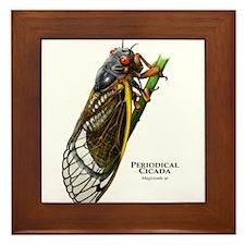Cecropia Moth Caterpillar Framed Tile