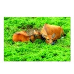 Nuzzling Cows Postcards (Package of 8)