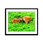 Nuzzling Cows Framed Panel Print