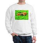 Nuzzling Cows Sweatshirt