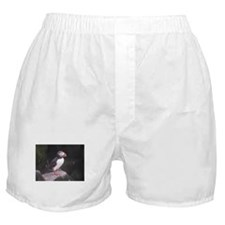 Puffin on the Rocks Boxer Shorts