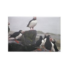 Puffin Conference Rectangle Magnet (100 pack)