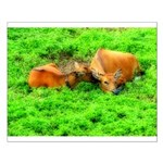 Nuzzling Cows Small Poster