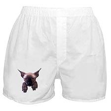 Unique Sphynx Boxer Shorts