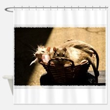 Sun and Shadow Rats Shower Curtain