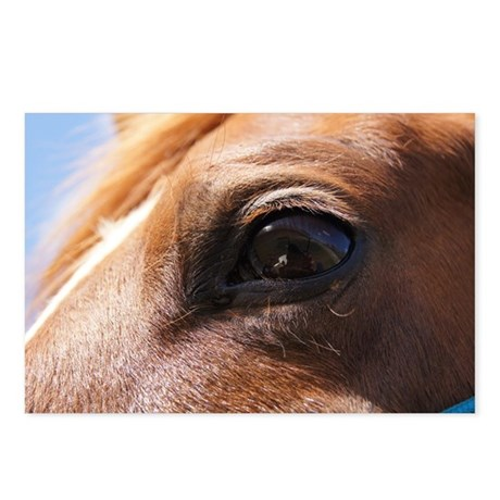 Horse Lover Postcards (Package of 8)