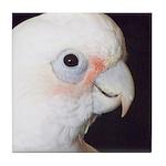 Noel. Cockatoo