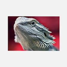 Dragon Head Rectangle Magnet