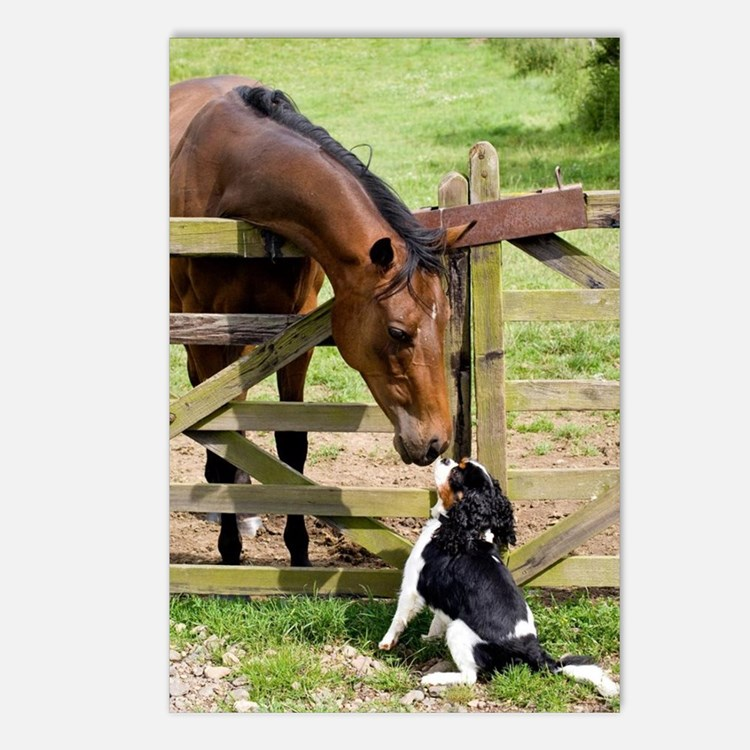 Horse & Hound Postcards (Package of 8)