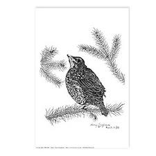 Robin Pen & Ink Postcards (Package of 8)