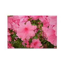 Pink Flowering Azalea Rectangle Magnet